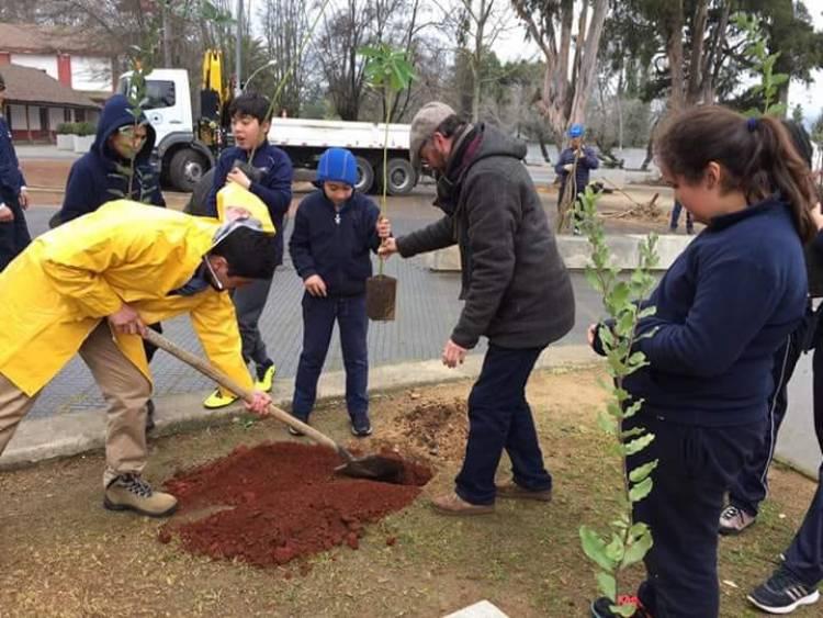 Plantan árboles nativos en la Plaza de Panimávida