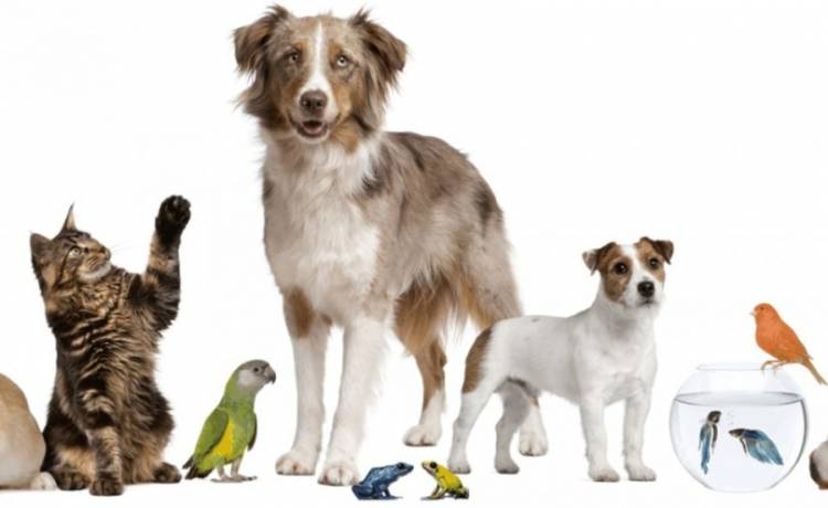 ONG Zoolidarios ejecutará proyecto de tenencia responsables de mascotas