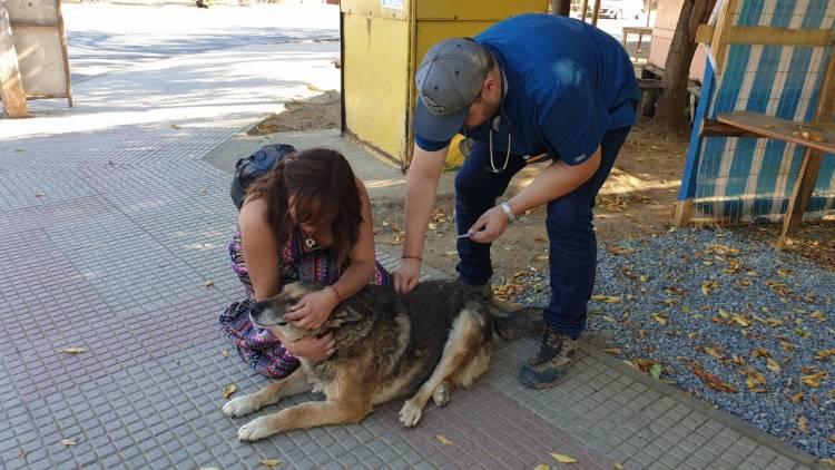 En Colbún realizan operativos veterinarios solidarios