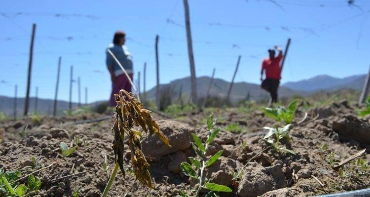Diputado Rentería piden se decrete emergencia agrícola en la Región del Maule