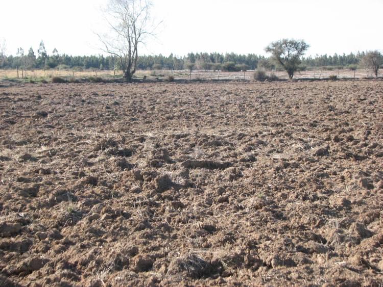 Indap invita a postular al segundo programa de suelos