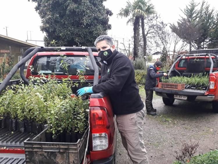 Donan dos mil árboles nativos a Cámara de Turismo Rural Achibueno