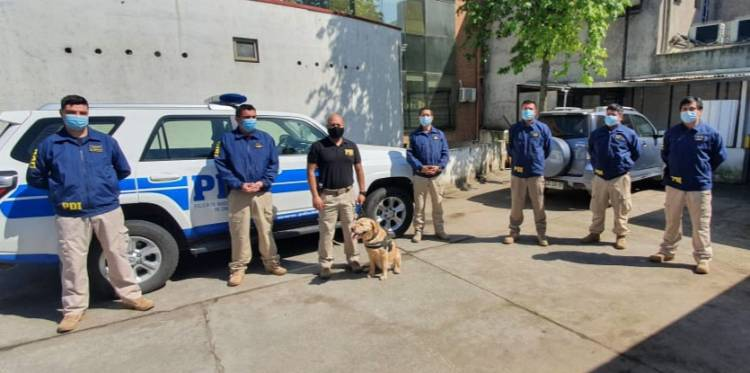 "Perro ""Akita"" deja la PDI tras ocho años detectando drogas"