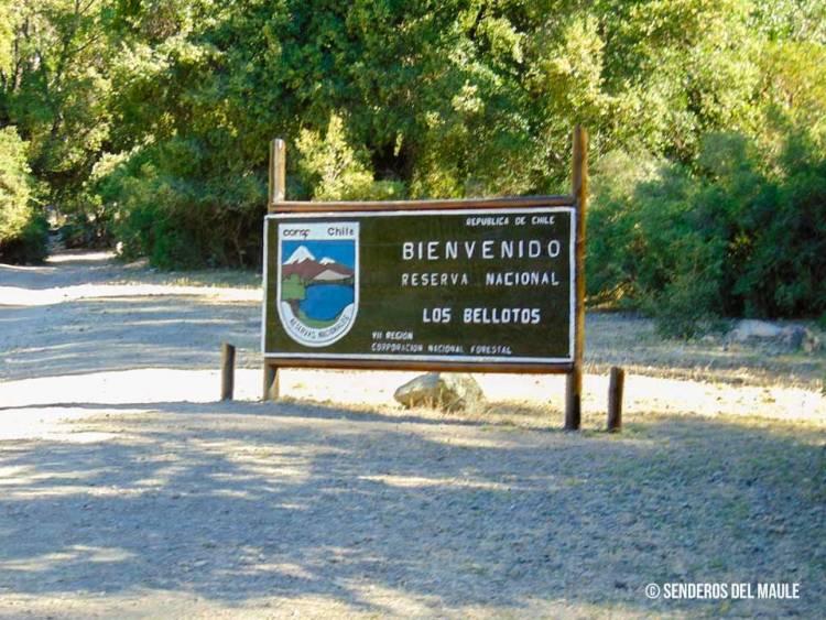 """Última Hora: Cuatro personas están extraviadas al interior de la Reserva Nacional """"Los Bellotos"""""""